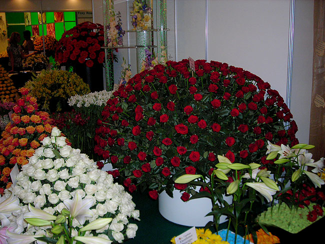 Цветы 2007