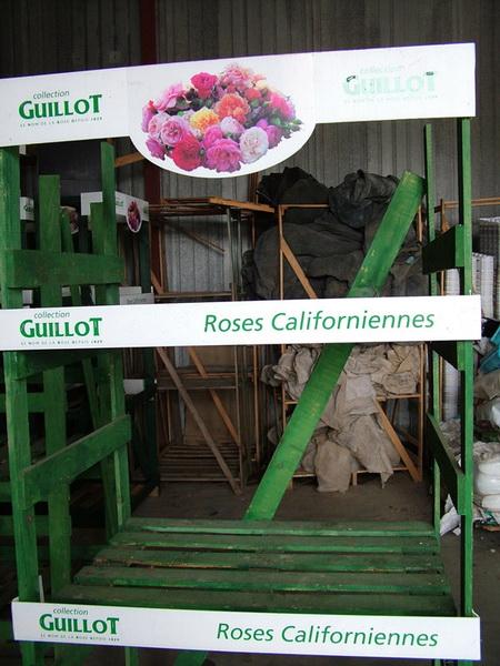Твой Сад розы Guillot