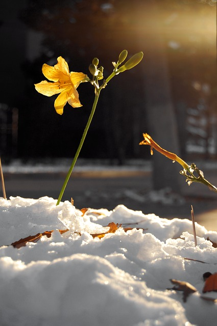 цветок, цветы, завод