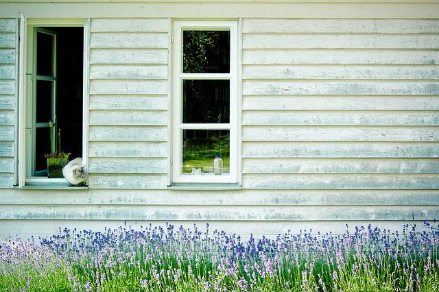 леса фасадные, окнах решетки, hauswand