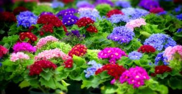 Как сохранить купленные растения