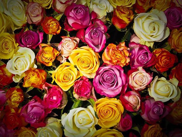 розы, букет из роз, букет