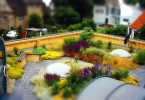 Декоративно-плодовый сад в условиях городского участка