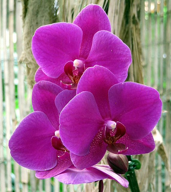 завод, цветок, орхидея