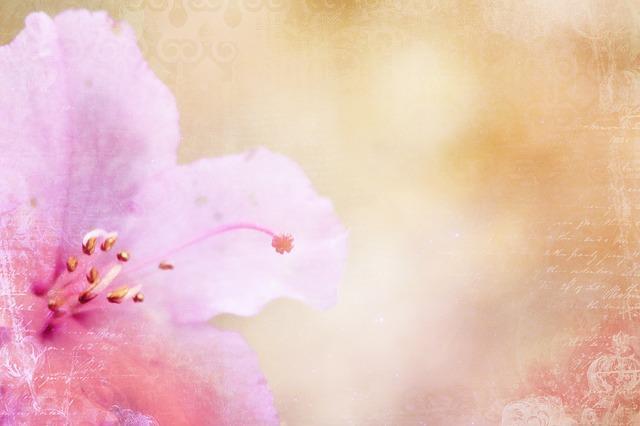 азалия, справочная информация, розовый