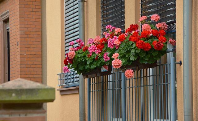 балконных растений, герань, склон geranien