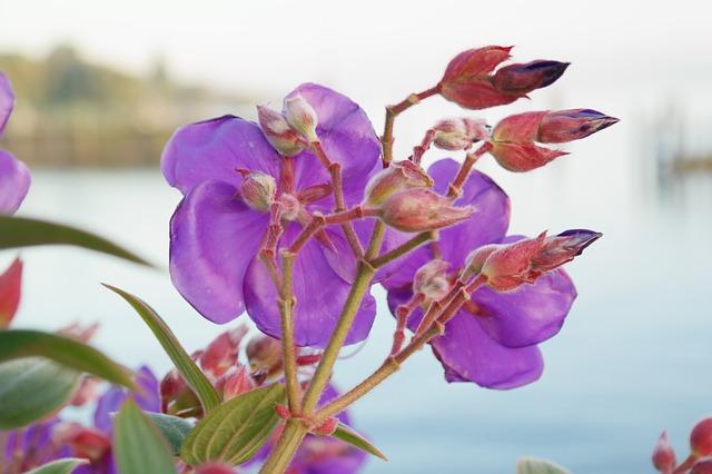 цветок, цвести, почка