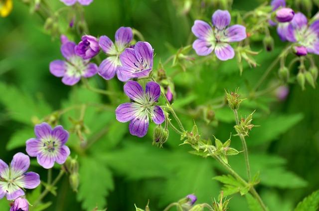цветок, фиолетовый, лето