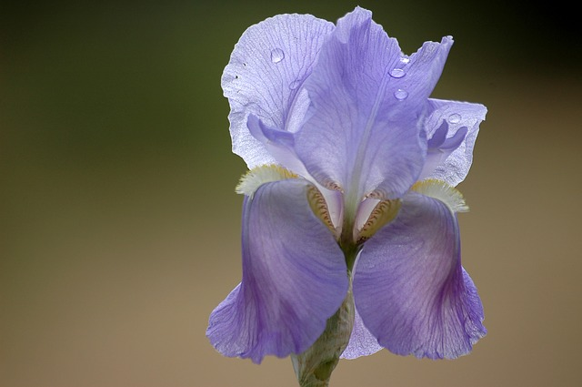 цветок, весна, фиолетовый