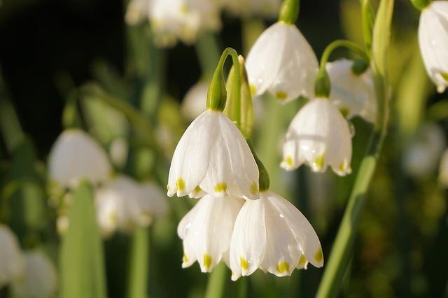 цветы, весна, природы