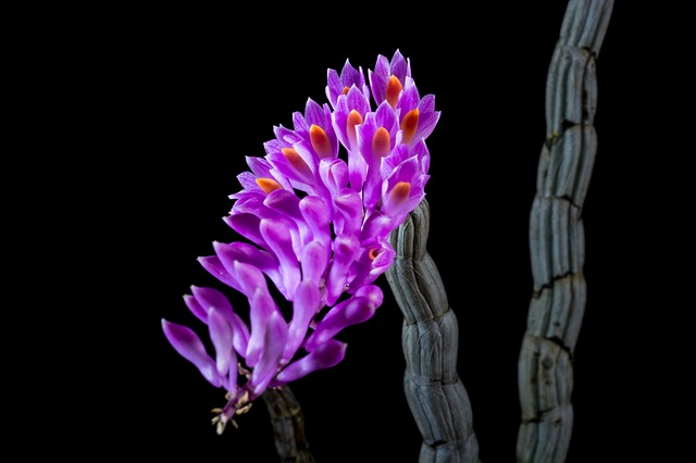 дикая орхидея, орхидея, цвести