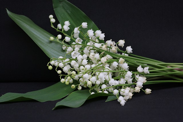 молочница, 1 мая, цветок