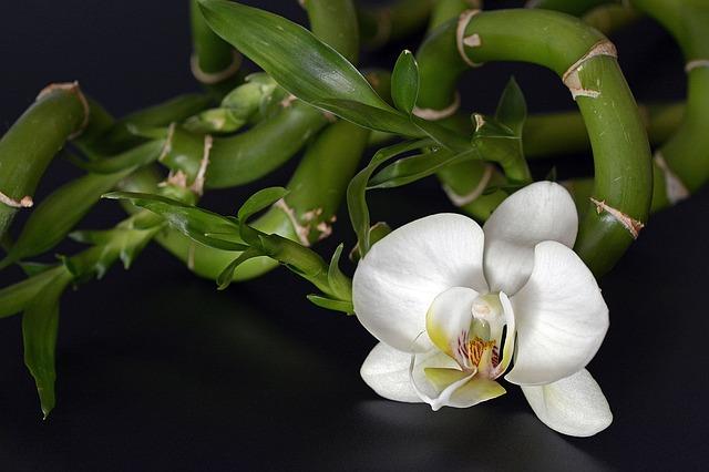 орхидея, орхидея цветок, бамбук