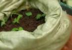 Выращиваем картофель в… мешках!