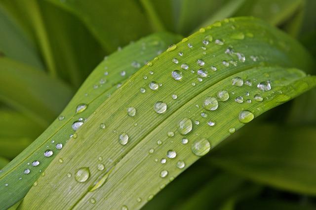 дождевая капля, сад, закрыть