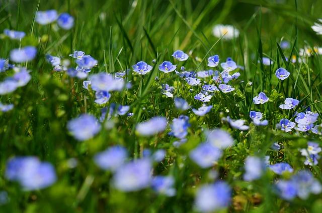 дубравная, почетная награда, цветы