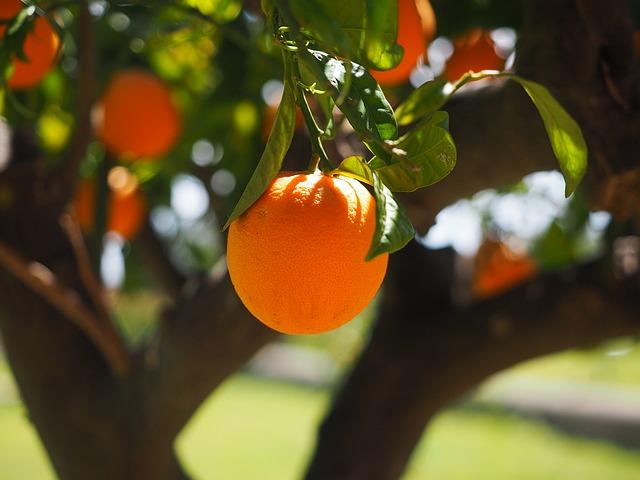 оранжевый, вход, племя