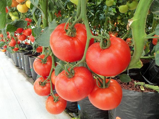 помидоры, овощи, овощной