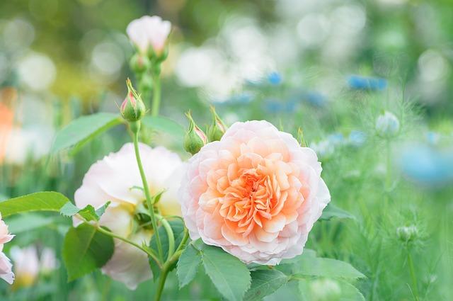 природные, завод, роуз