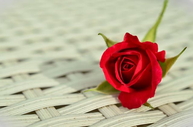роуз, красная роза, романтические