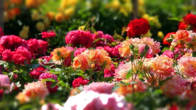 Типы розария