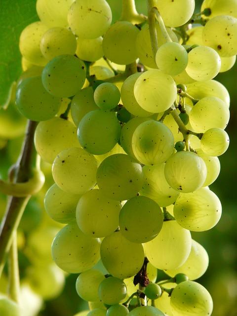 виноград, вина, завод