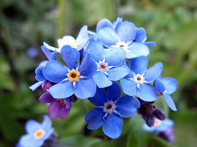 завод, цветок, синий