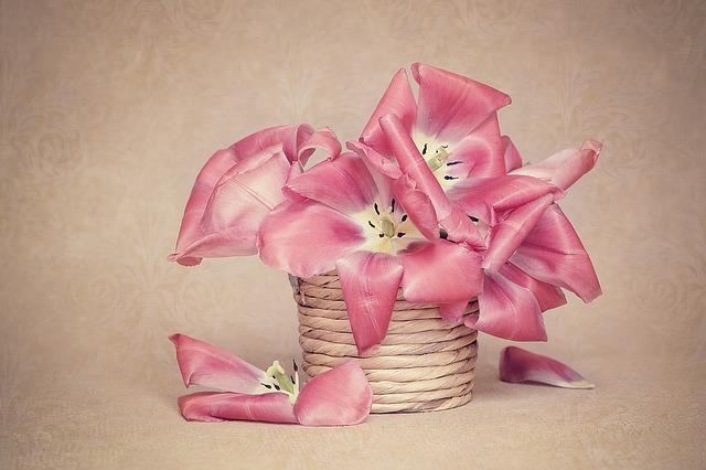 цветы, тюльпаны, горшок