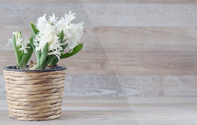гиацинт восточный, гиацинт, цветок