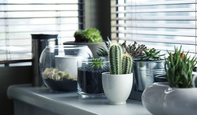 горшки, растений, кактус