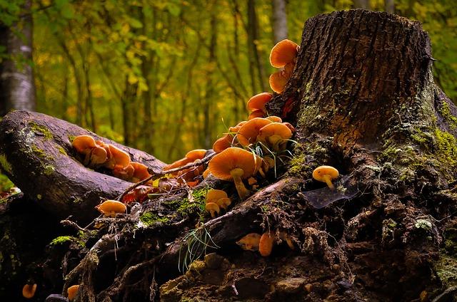 гриб, дикая, природа