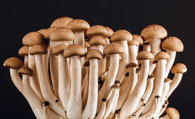 гриб, грибы, многие