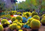 """Несколько """"колючих"""" фактов о кактусах"""