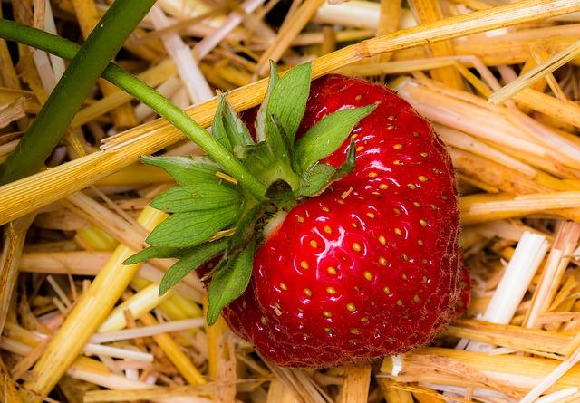клубника, фруктов, красный