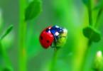 Насекомые-помощники: боремся с паразитами природными средствами