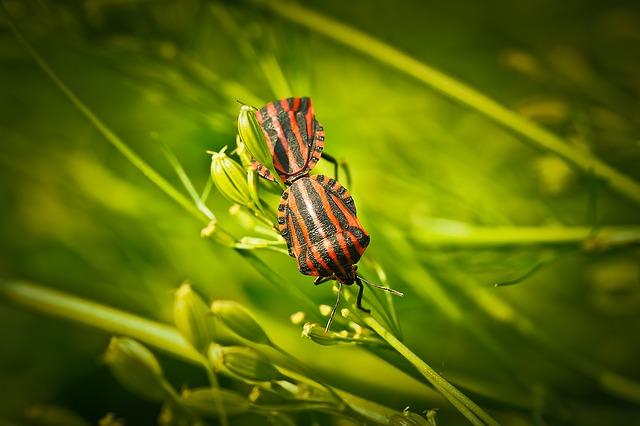 мертвоеды, насекомое, жук
