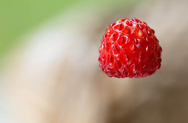 небольшая лесная земляника, ягод, фруктов