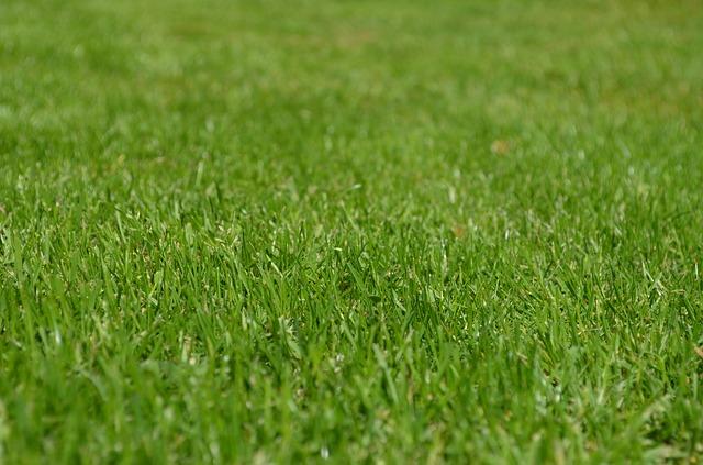 раш, луг, декоративные травы