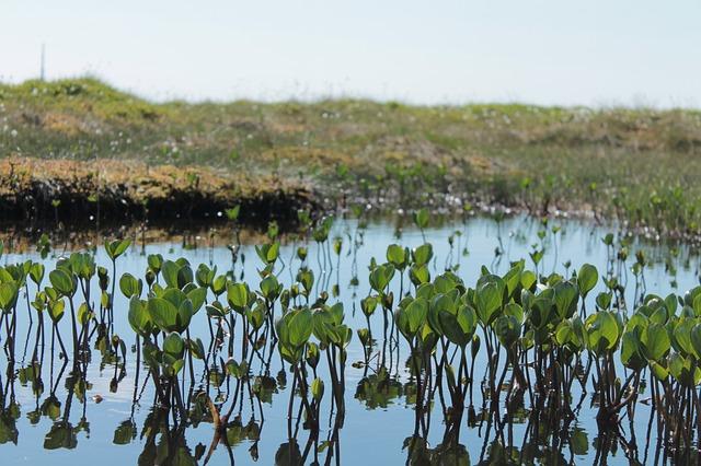 растения, водные растения, торф