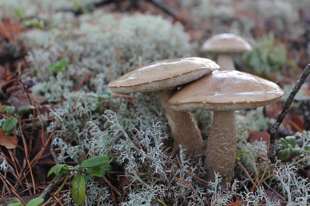 растительность, грибы, браун