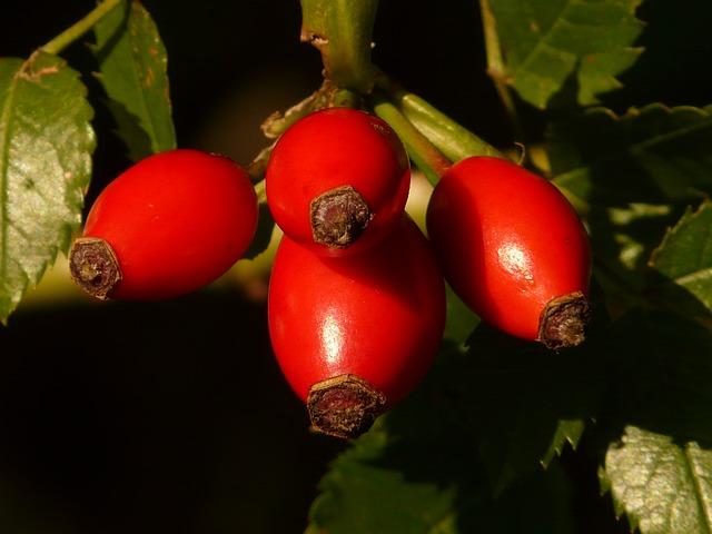 шиповник, фруктов, sammelfrucht