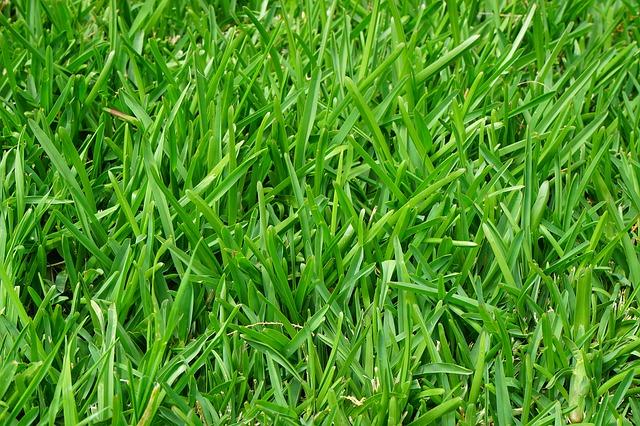 трава, раш, сочный