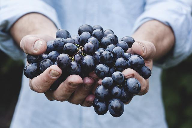 виноград, связка, фруктов