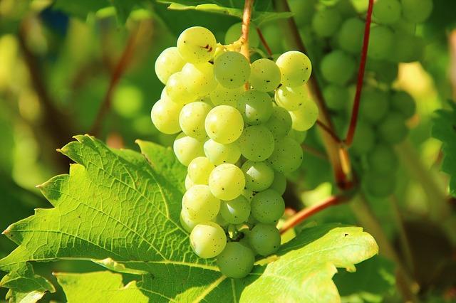 виноград, вина, фруктов
