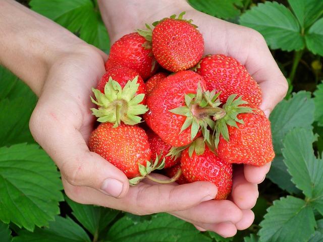 ягоды, клубника, руки