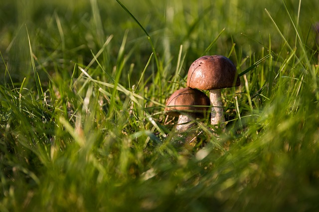 грибы, осень, лес
