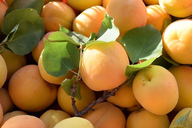 абрикосы, спелый, фруктов