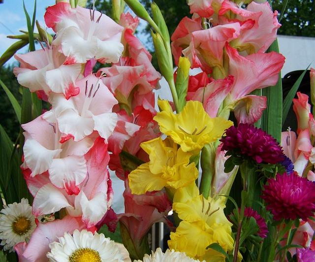 букет цветов, гладиолус, срезанный цветок