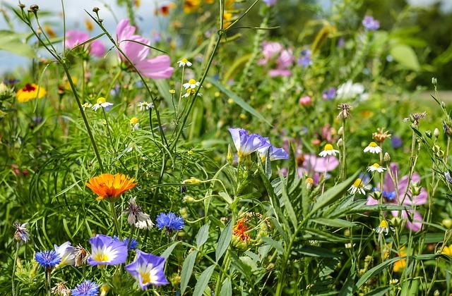 цветочный луг, полевые цветы, летний луг