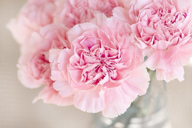 цветы, розовый, гвоздика